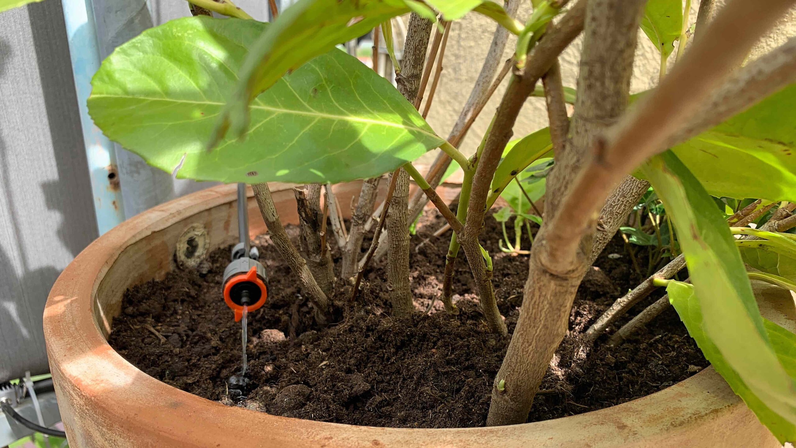 Full Size of Bewässerung Balkon Pflanzen Auf Terrasse Automatisiert Mit Apple Homekit Bewssern Garten Bewässerungssystem Bewässerungssysteme Automatisch Test Wohnzimmer Bewässerung Balkon