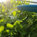 Im Garten Und Auf Dem Balkon Beim Bewssern Wasser Sparen Bewässerungssysteme Bewässerung Bewässerungssystem Test Automatisch Wohnzimmer Bewässerung Balkon