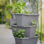 Paul Potato Kartoffelturm Erfahrungen Gusta Garden Starter 3 Etagen Bloomling Deutschland Wohnzimmer Paul Potato Kartoffelturm Erfahrungen