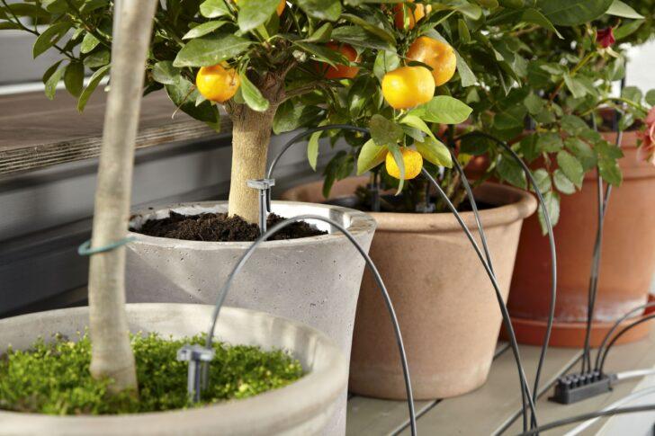 Medium Size of Bewässerung Balkon Bewsserung Aber Mit System Willkommen In Franks Kleinem Garten Bewässerungssysteme Test Bewässerungssystem Automatisch Wohnzimmer Bewässerung Balkon