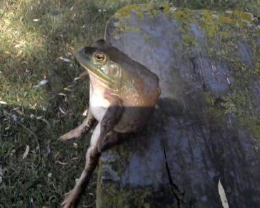 Bullfrog Lulu Wohnzimmer Black Lives Matter Lindsaaykaye Bullfrog Sofa
