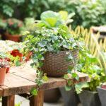 Groe Kapazitt Hause Pflanzer Gewebt Selbst Bewsserung Terrasse Bewässerungssystem Garten Bewässerungssysteme Test Bewässerung Automatisch Wohnzimmer Bewässerung Balkon