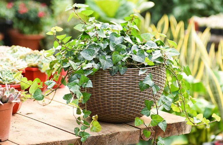 Bewässerung Balkon Wohnzimmer Groe Kapazitt Hause Pflanzer Gewebt Selbst Bewsserung Terrasse Bewässerungssystem Garten Bewässerungssysteme Test Bewässerung Automatisch