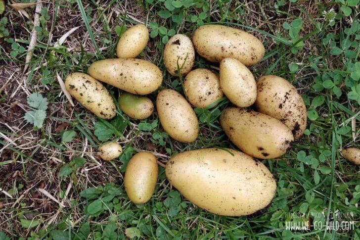 Medium Size of Paul Potato Kartoffelturm Erfahrungen Wohnzimmer Paul Potato Kartoffelturm Erfahrungen