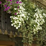 Bewässerung Balkon Bewsserungssystem Fr Den Ohne Wasseranschluss Garten Bewässerungssysteme Test Automatisch Bewässerungssystem Wohnzimmer Bewässerung Balkon