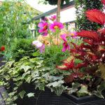 Bewässerung Balkon Automatische Bewsserung Terrasseset Preisvorteil Von 40 Bewässerungssysteme Garten Test Automatisch Bewässerungssystem Wohnzimmer Bewässerung Balkon