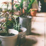 Bewässerung Balkon Wohnzimmer Bewässerung Balkon Pflanzen Im Urlaub Tipps Zur Pflanzenbeswsserung In Ihrer Bewässerungssysteme Garten Bewässerungssystem Automatisch Test