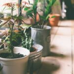 Bewässerung Balkon Pflanzen Im Urlaub Tipps Zur Pflanzenbeswsserung In Ihrer Bewässerungssysteme Garten Bewässerungssystem Automatisch Test Wohnzimmer Bewässerung Balkon