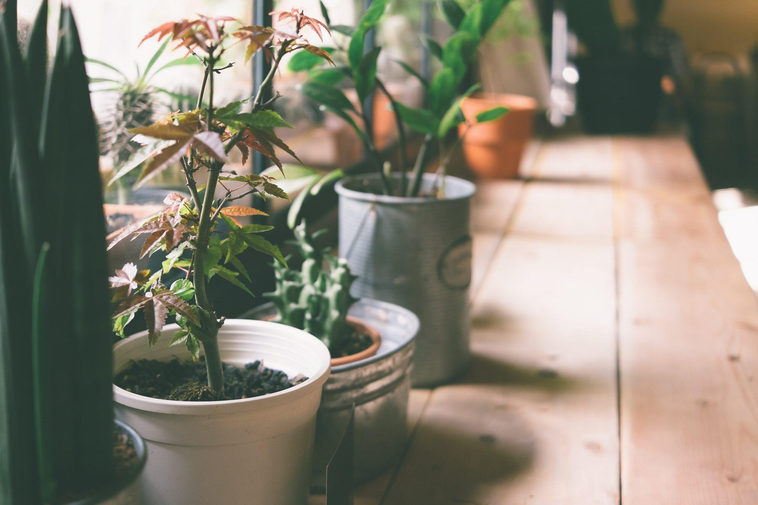 Full Size of Bewässerung Balkon Pflanzen Im Urlaub Tipps Zur Pflanzenbeswsserung In Ihrer Bewässerungssysteme Garten Bewässerungssystem Automatisch Test Wohnzimmer Bewässerung Balkon