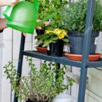 Thumbnail Size of Bewässerung Balkon Frau Bewässerungssysteme Garten Bewässerungssystem Automatisch Test Wohnzimmer Bewässerung Balkon