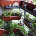 Geeignete Pflanzgefe Nutzbalkon 28417 Bio Balkon Bewässerungssysteme Garten Bewässerungssystem Test Bewässerung Automatisch Wohnzimmer Bewässerung Balkon