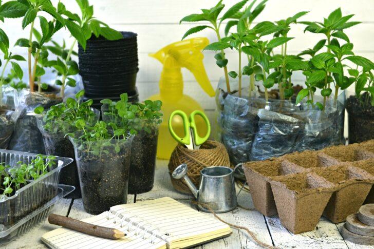 Medium Size of Bewässerung Balkon Pflanzen Gieen Im Urlaub Bewssern Sie Ihre Blumen Automatisch Garten Bewässerungssystem Bewässerungssysteme Test Wohnzimmer Bewässerung Balkon
