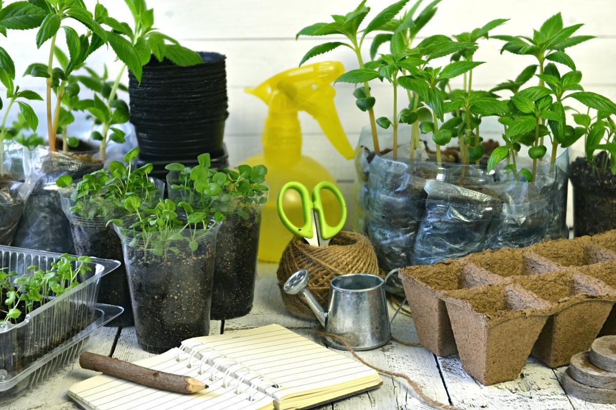 Full Size of Bewässerung Balkon Pflanzen Gieen Im Urlaub Bewssern Sie Ihre Blumen Automatisch Garten Bewässerungssystem Bewässerungssysteme Test Wohnzimmer Bewässerung Balkon