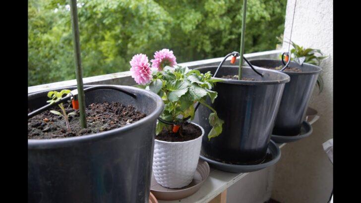 Medium Size of Bewässerung Balkon Gardena Automatische Bewsserung Ohne Hauswasseranschluss Fr Garten Bewässerungssysteme Test Bewässerungssystem Automatisch Wohnzimmer Bewässerung Balkon