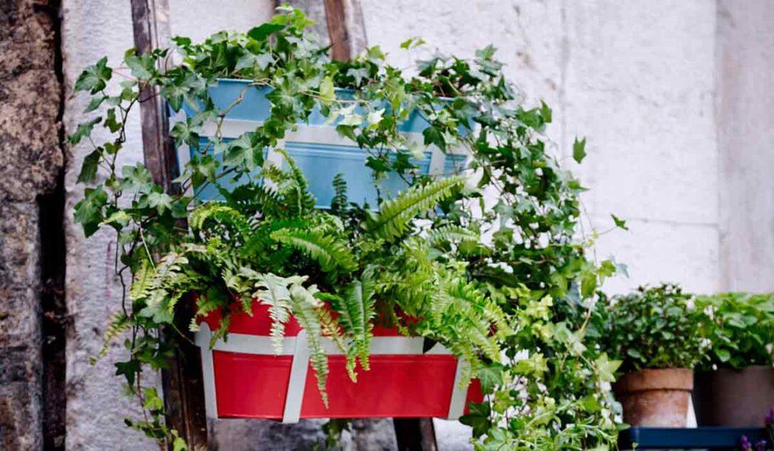 Large Size of Balkonpflanzen Ber Urlaubszeit Retten Garten Bewässerung Automatisch Bewässerungssysteme Test Bewässerungssystem Wohnzimmer Bewässerung Balkon