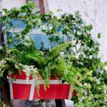 Balkonpflanzen Ber Urlaubszeit Retten Garten Bewässerung Automatisch Bewässerungssysteme Test Bewässerungssystem Wohnzimmer Bewässerung Balkon