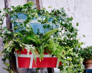 Bewässerung Balkon Wohnzimmer Balkonpflanzen Ber Urlaubszeit Retten Garten Bewässerung Automatisch Bewässerungssysteme Test Bewässerungssystem