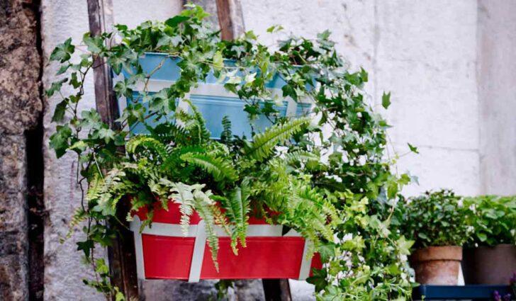 Medium Size of Balkonpflanzen Ber Urlaubszeit Retten Garten Bewässerung Automatisch Bewässerungssysteme Test Bewässerungssystem Wohnzimmer Bewässerung Balkon