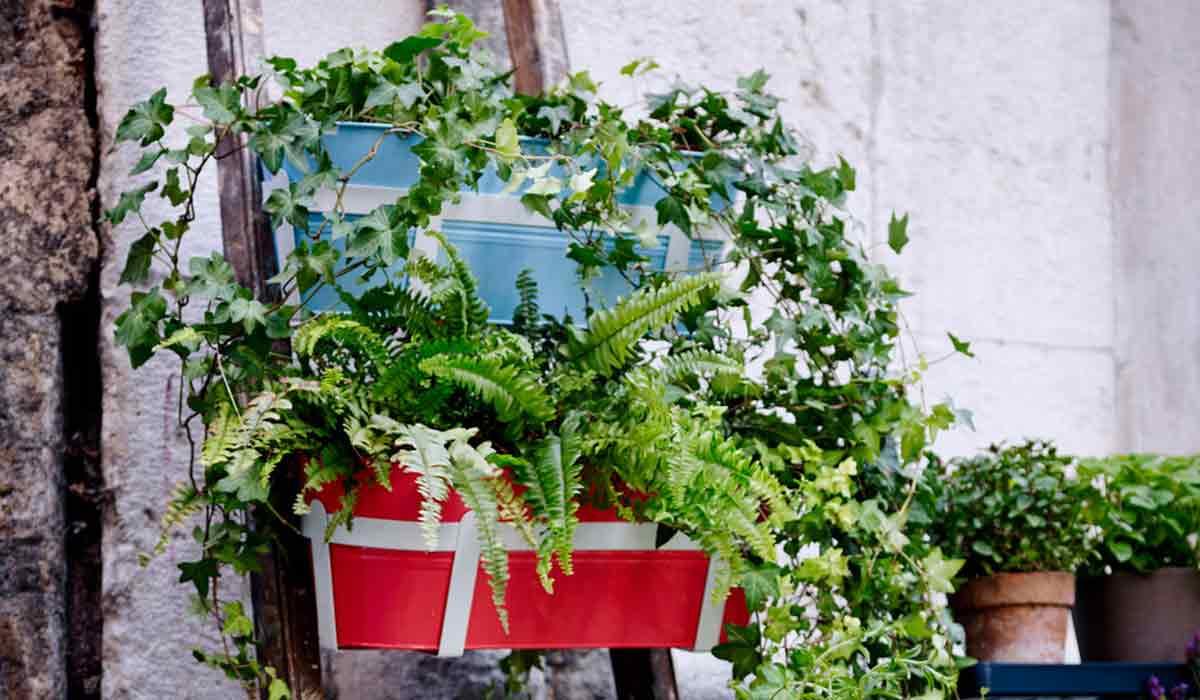 Full Size of Balkonpflanzen Ber Urlaubszeit Retten Garten Bewässerung Automatisch Bewässerungssysteme Test Bewässerungssystem Wohnzimmer Bewässerung Balkon