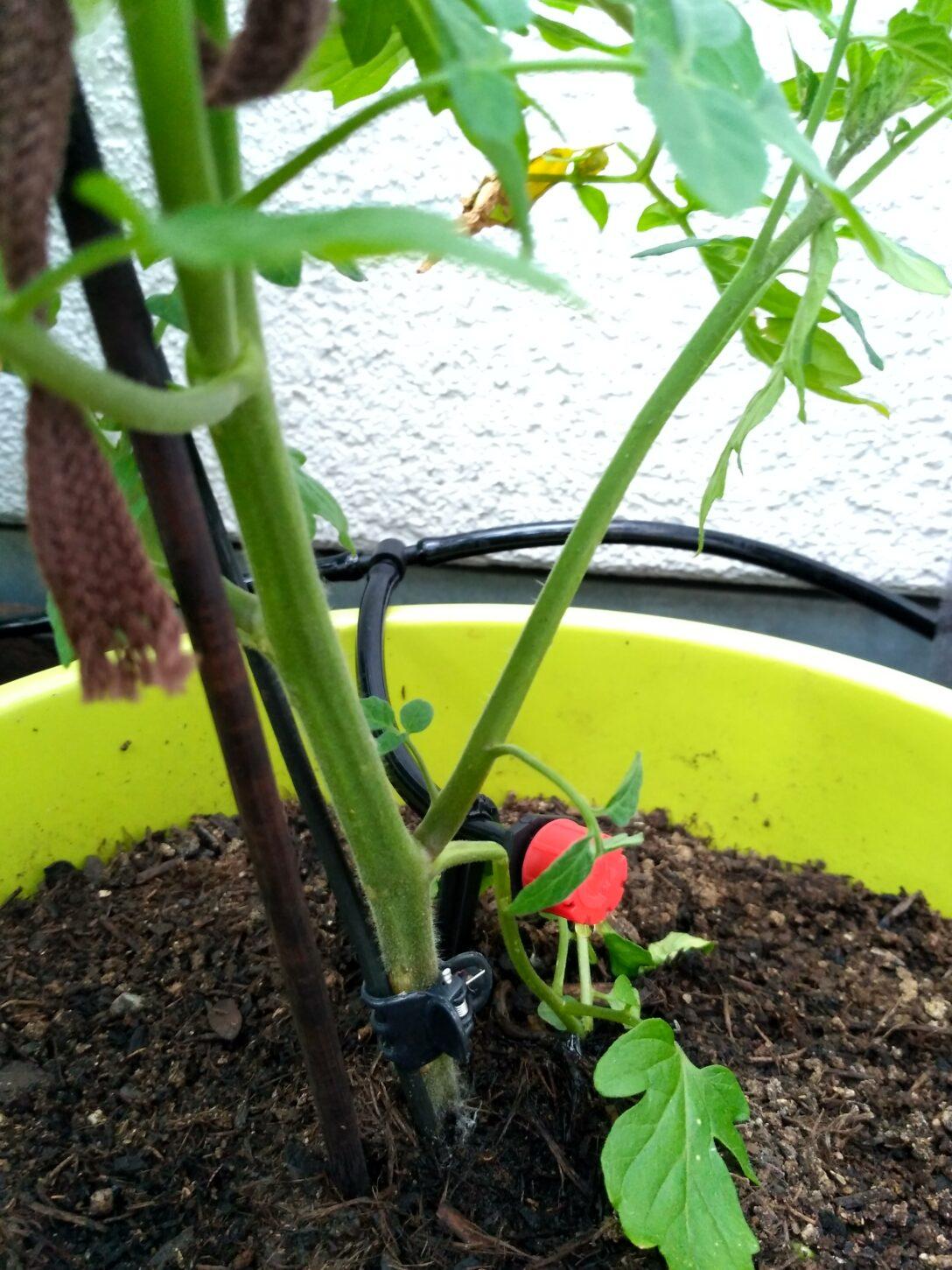 Large Size of Bewässerung Balkon Fr Faule Gartenfans Automatische Bewsserung Aus China Bewässerungssysteme Garten Test Bewässerungssystem Automatisch Wohnzimmer Bewässerung Balkon