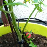 Bewässerung Balkon Fr Faule Gartenfans Automatische Bewsserung Aus China Bewässerungssysteme Garten Test Bewässerungssystem Automatisch Wohnzimmer Bewässerung Balkon