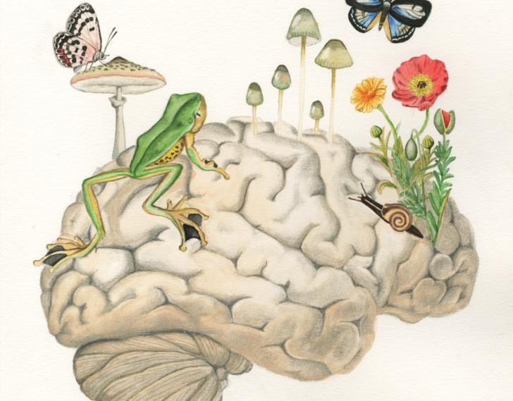 Medium Size of Hilary Bouvier Illustration Bullfrog Sofa Wohnzimmer Bullfrog Lulu