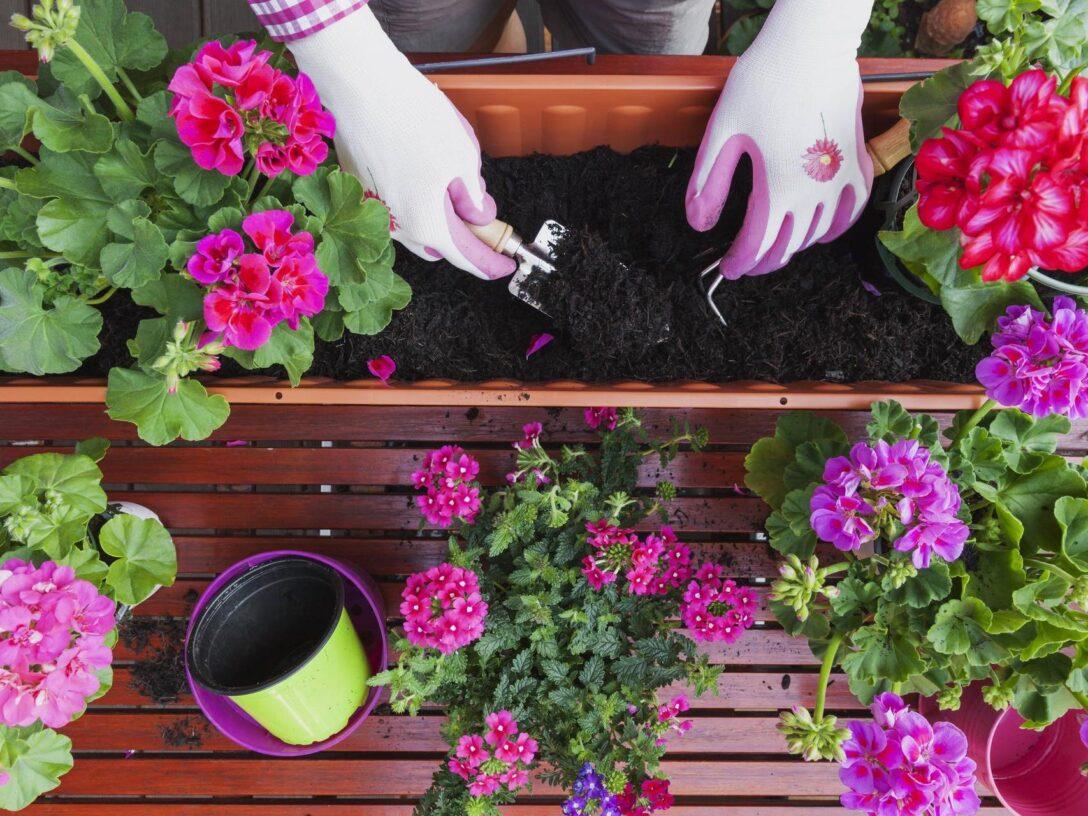 Bewässerung Balkon Balkonpflanzen Richtig Setzen Und Pflegen Tipps Bewässerungssysteme Garten Bewässerungssystem Test Automatisch