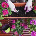Bewässerung Balkon Balkonpflanzen Richtig Setzen Und Pflegen Tipps Bewässerungssysteme Garten Bewässerungssystem Test Automatisch Wohnzimmer Bewässerung Balkon