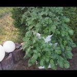 Paul Potato Kartoffelturm Erfahrungen Hochbeet Pflanzgef Fr Balkon Und Wohnzimmer Paul Potato Kartoffelturm Erfahrungen