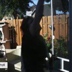 Fensterputztuch Test Dusch Wc Bewässerungssysteme Garten Drutex Fenster Betten Sicherheitsfolie Wohnzimmer Fensterputztuch Test