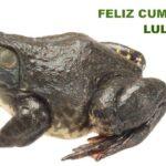 Bullfrog Lulu Wohnzimmer Bullfrog Lulu Sofa Preis