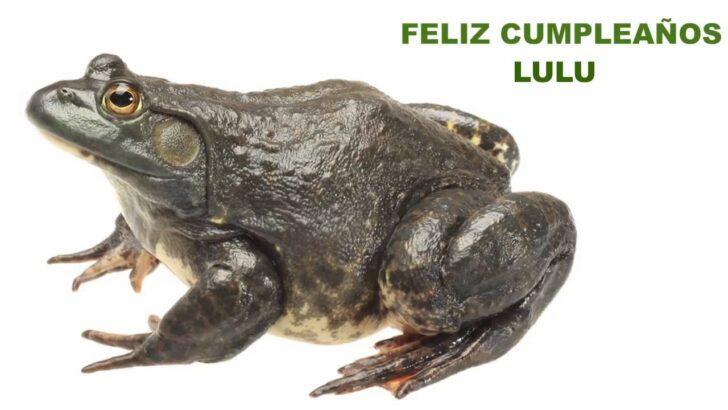 Medium Size of Bullfrog Lulu Sofa Preis Wohnzimmer Bullfrog Lulu