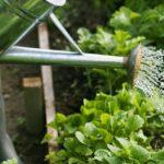 Bewässerung Balkon Wie Sie Ihre Pflanzen Richtig Gieen Bewässerungssysteme Garten Test Automatisch Bewässerungssystem Wohnzimmer Bewässerung Balkon