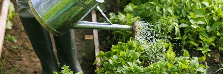 Medium Size of Bewässerung Balkon Wie Sie Ihre Pflanzen Richtig Gieen Bewässerungssysteme Garten Test Automatisch Bewässerungssystem Wohnzimmer Bewässerung Balkon