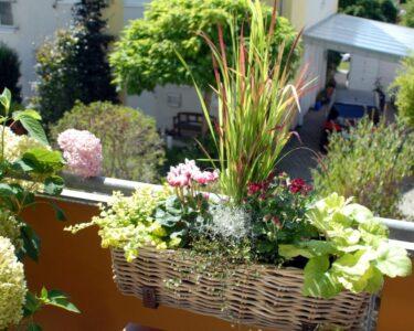 Bewässerung Balkon Wohnzimmer Bewässerung Balkon Bewsserungssytem Diese Helfen Ihren Pflanzen Bei Hitze Welt Bewässerungssysteme Garten Test Bewässerungssystem Automatisch