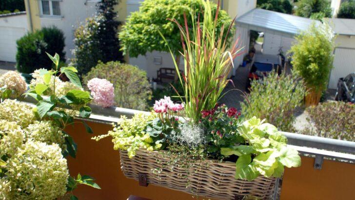 Medium Size of Bewässerung Balkon Bewsserungssytem Diese Helfen Ihren Pflanzen Bei Hitze Welt Bewässerungssysteme Garten Test Bewässerungssystem Automatisch Wohnzimmer Bewässerung Balkon