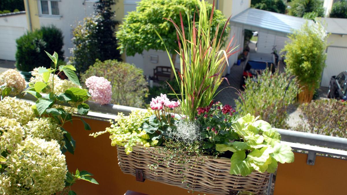 Full Size of Bewässerung Balkon Bewsserungssytem Diese Helfen Ihren Pflanzen Bei Hitze Welt Bewässerungssysteme Garten Test Bewässerungssystem Automatisch Wohnzimmer Bewässerung Balkon