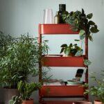 Pflanzen Bringen Leben Und Farbe In Dein Zuhause Hier Haben Wir Modulküche Ikea Sofa Mit Schlaffunktion Küche Kosten Miniküche Betten Bei Kaufen 160x200 Wohnzimmer Kücheninseln Ikea