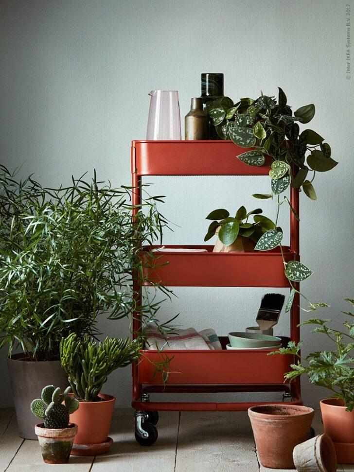 Medium Size of Pflanzen Bringen Leben Und Farbe In Dein Zuhause Hier Haben Wir Modulküche Ikea Sofa Mit Schlaffunktion Küche Kosten Miniküche Betten Bei Kaufen 160x200 Wohnzimmer Kücheninseln Ikea