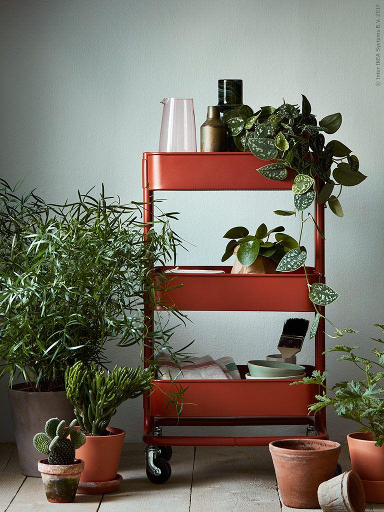 Full Size of Pflanzen Bringen Leben Und Farbe In Dein Zuhause Hier Haben Wir Modulküche Ikea Sofa Mit Schlaffunktion Küche Kosten Miniküche Betten Bei Kaufen 160x200 Wohnzimmer Kücheninseln Ikea